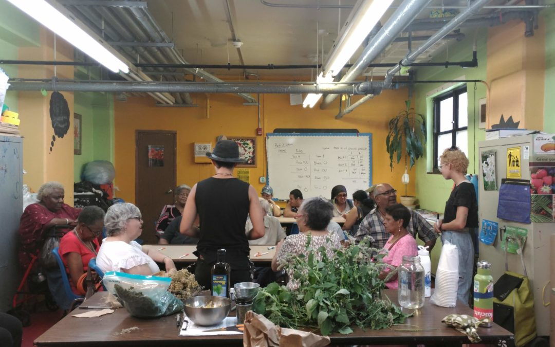 Seniors – Plant Ancestor Medicine at Marble Hill